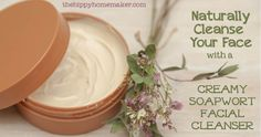 Naturally Cleanse Your Face with a Creamy Soapwort Facial Cleanser - thehippyhomemaker.com