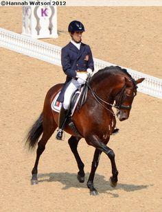 London 2012: Lusitano stallion Rubi in London Olympics
