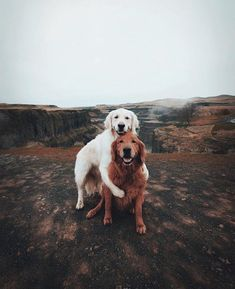 Instagram for these cute dogs is @wat.ki