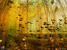 Gorgeous photo of tadpoles on the move. National Geographic has a great place on their website where you can see these gems -- and download as your computer wallpaper. Love it!