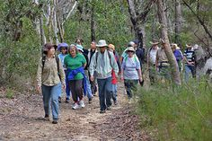 Hornsby Shire Council runs a program of free guided bushwalks throughout the year. Activities, Walks, Ideas, Thoughts