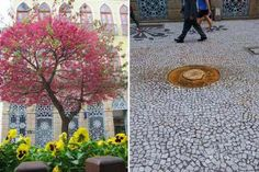 Prefeitura manda cortar cerejeiras doadas à Curitiba pelo imperador do Japão – Mundo-Nipo