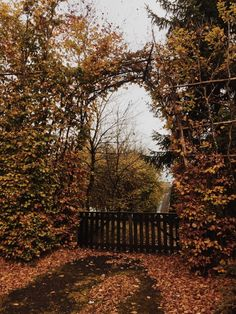 dancing in the moonlight — laicataure: Autumn walks 🍂🍁🍄🍂 October Country, Autumn Walks, Jeff The Killer, Autumn Cozy, Autumn Photography, Autumn Aesthetic Photography, Seasons Of The Year, All Nature, Hello Autumn