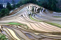 landscapelifescape:    Rice Field in Yunnan, China   (by peace-on-earth.org)