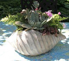 Designing Domesticity blogs about her HomeGoods shell planter, a lovely outdoor centerpiece!