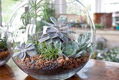 Cómo hacer un terrario con botes de vidrio paso a paso. Todo lo que necesitas, cua´les son las plantas más adecuadas, mantenimiento y mucho más.