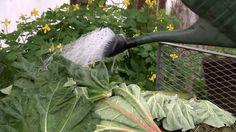 Wenn der Komposthaufen überzuquellen droht, hilft ein garantiert biologisches Hausmittel: Mischen Sie Kompostbeschleuniger einfach selbst an. Dazu brauchen Sie nur Zucker, Hefe und Wasser.