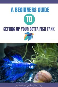 This post will cover important steps you should take in order to create the perfect setting for a betta fish tank, it will state the importance of water cycling and give you tips for taking care of your new fish. Betta Fish Toys, Betta Fish Care, Aquarium Set, Aquarium Fish Tank, Fish Tanks, Fish Aquariums, Aquarium Ideas, Colorful Fish, Tropical Fish