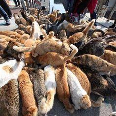 49 Islands You Must Visit Before You Die -Cat island Japan
