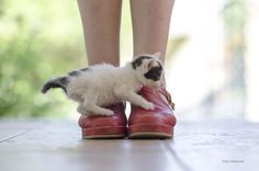 mel-cat: (via / Suerte y destino. by Pilar Taberner) Baby Animals, Funny Animals, Cute Animals, Cute Kittens, Cats And Kittens, Crazy Cat Lady, Crazy Cats, Matou, Funny Animal Pictures