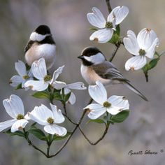 Chickadees by Russell Cobane