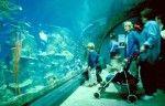 Downtown Aquarium- Denver, CO