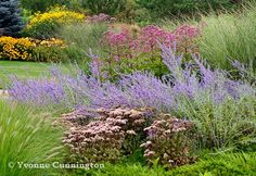 Sedum 'Matrona' with Russian sage and Eupatorium, Miscanthus 'Morning Light' with Rudbeckia 'Goldsturm' and R. nitida 'Herbstsonne' in the distance