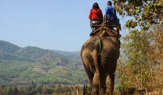 Popular sightseeing tours, activities, day trips and things to do in Bali Bali is Elephant Safari Park & Ride Honeymoon Cottages, Safari, Premium Hotel, Elephant Ride, Hills Resort, Kerala Tourism, Munnar, Tours, Best Hotels