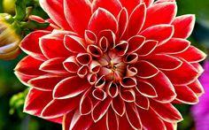 Google Afbeeldingen resultaat voor http://users.skynet.be/fa815090/bloemen_van_cauwenberghe_boeketten_4.jpg