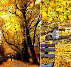 Autumn collage by Fat Orange Cat Studio, via Flickr