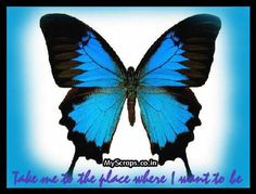 Butterflies Scraps - Comments, Images and Graphics for Orkut