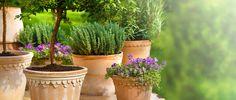 Krukker og potter i alle former og farver til haven og hjemmet