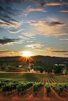 This view looks a lot like the top of our street. Sebastopol is SENSATIONAL!  (I've never been there)~