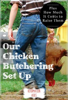 See our chicken butchering set up and process and find out how much it costs to raise meat chickens