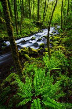 Columbia River Gorge, Oregon.USA