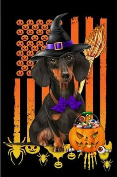 Short Haired Dachshund, Dachshund Art, Halloween Witch Decorations, Dog Halloween, Halloween Stuff, Peace Flag, Weenie Dogs, Doggies, Dog Rules
