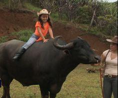 Una mascota de 1300 kilos se ganó el amor de una joven veterinaria