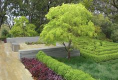modern way to use coral bells, boxwood, grasses, japanese maples
