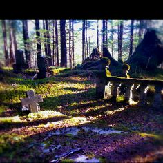 An old cemetery in Sitka. Just off the road in the woods.