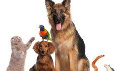 Consejos para elegir adecuadamente animal de compañía. https://theyellowpet.blog/consejos-adecuadamente-compania/