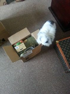 Subscribe to #BunnyBox & save even more on your #bunny treats & goodies :) http://www.getbunnyox.com/shop