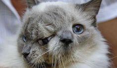 chat a deux tetes