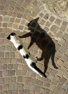 ♬ Me and my shadow, Strolling down the avenue.  ♪  Me and my shadow, No one to tell our troubles to. ♬