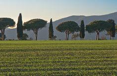 Il paese dove la terra è verde anche d'inverno - The country where the land is green even in winter (Maremma, Tuscany, Italy)