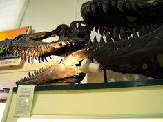 Gorgosaurus x2
