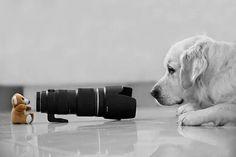 #black #camera # cute # dog