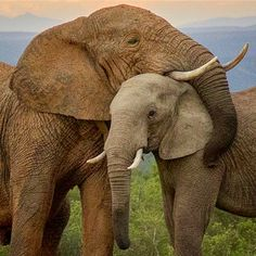 And this is exactly what comes to mind when I think of an elephant hug..  Picture by the amazing Conrad Cramer​​...