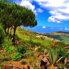 Lebanon nature