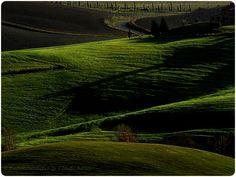 Winter in der Toskana: grün, grüner gehts nicht mehr...Colline Pisane  https://www.facebook.com/EssenReisenLeben  #EssenReisenLeben #Chianni #CollinePisana #Tuscany #Toskana #Toscana