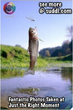 """Leap of faith, this is why super realistic flies are so important. You'd never get this level of commitment from a fish to bite with an """"attractor"""" pattern. Fly Fishing Tips, Trout Fishing, Bass Fishing, Fishing Basics, Fishing Photography, Animal Photography, Nature Photography, Fauna Marina, Fish Wallpaper"""