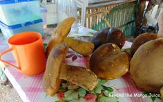 Jungle mushrooms are a favourite food for Thai villagers and are picked from…
