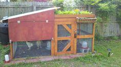 "chicken coop/roof garden/run-off rain barrel I've seen a few ""pretty"" chicken coops but this is functional, so....."