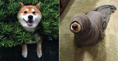 Dogs That Are Stuck But Pretending Everything Is Fine