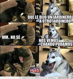Best Funny Jokes For Adults Lol Humor Ideas Funny Animal Jokes, Dog Jokes, Best Funny Jokes, Funny Puns, Stupid Funny Memes, Animal Memes, Best Memes, Funny Humor, Memes Humor