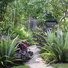 Long narrow woodland garden with Astelia chathamica standing sentinel of the pathway. Garden Ideas Nz, Garden Inspiration, Back Gardens, Small Gardens, Architectural Plants, Stipa, Low Maintenance Garden, Woodland Garden, Home Landscaping