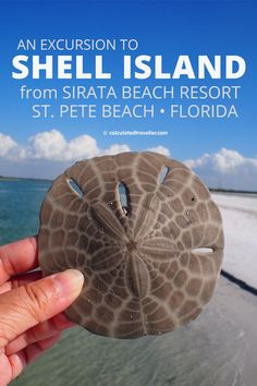 Fun in the Sun on St. Pete Beach Florida at Sirata Beach Resort - Shell Island Excursion Florida Travel, Florida Beaches, Travel Usa, Clearwater Beach Florida, Travel Tips, Mexico Travel, Travel Abroad, Spain Travel, Travel Ideas