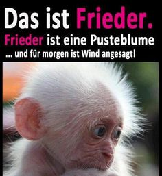 That is Frieder. Frieder is a dandelion … and tomorrow there is wind … – funny photo Funny Photo Memes, Funny Photos, Primates, Gorillas In The Mist, Quotes About Everything, Cute Animal Pictures, Cute Funny Animals, Humor, Animal Memes