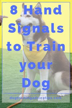 Dog Training Techniques, Dog Training Tips, Dog School, Hand Signals, Dog Games, Spaniel Puppies, Shih Tzu Dog, Therapy Dogs, Dog Travel
