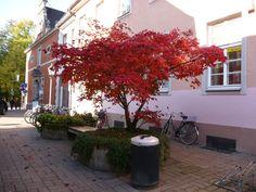As cores do outono alemão...