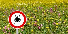 4 ways to protect your family from Lyme disease - Reviewed.com